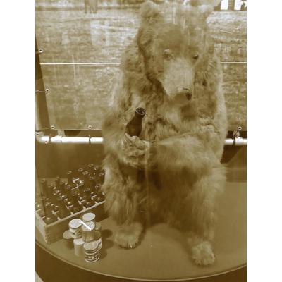 Bär Wojtek: Ausstellung im Nationaal Bevrijdingsmuseum Groesbeek