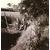 Dinkelbron 1956